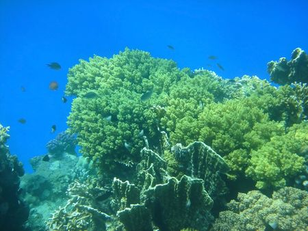 coral reef iin the Red sea photo