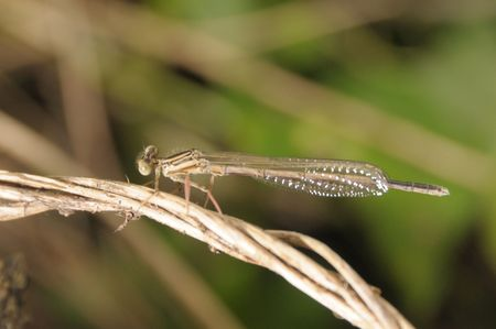 Dragonfly on green leaf photo
