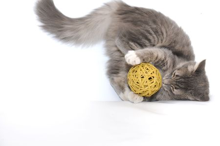 cat toy: Grey kitten playing with yellow ball Stock Photo