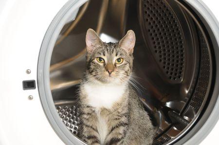 clothes washer: la lavadora de ropa y de gato en la lavadora de ropa