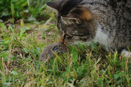 To cat of a toy, and mouse of tear photo