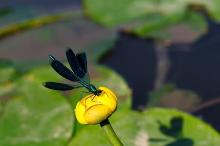 dragonfly Stock Photo - 13330072