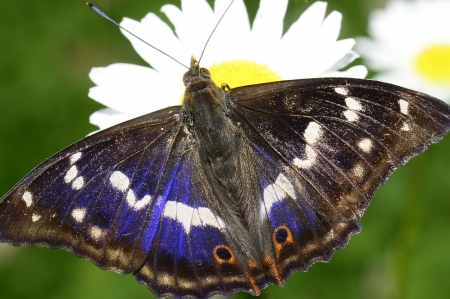 Butterfly feeding at Leaming Gardens Stock Photo - 18128965