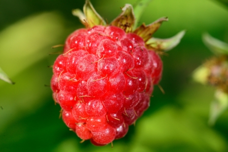 Ripe raspberry with green leaf  Stock Photo - 18415283