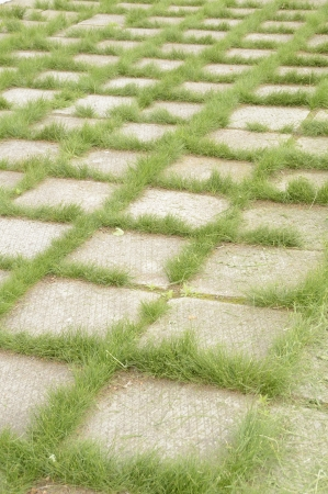 sprouted: The grass which has sprouted through cracks in concrete plates