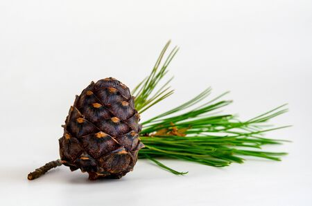 Heap of pine cone with needles on white background Stock fotó