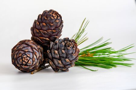 Group of pine cone with needles on white background