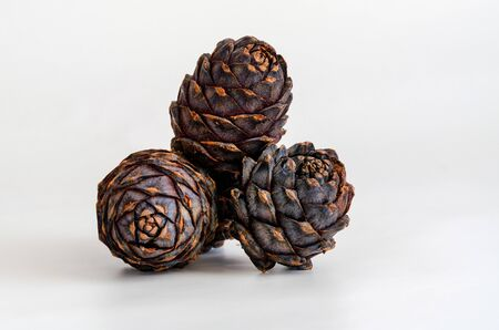 Group of pine cone on white background