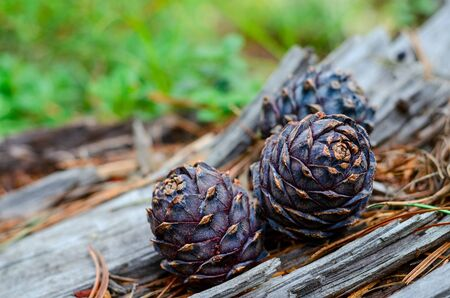 Group of pine cone with needles on wooden Stock fotó