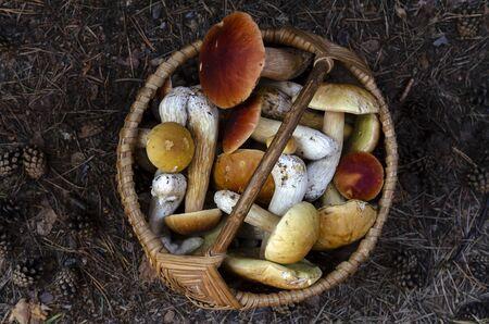 Mushrooms boletus in the basket