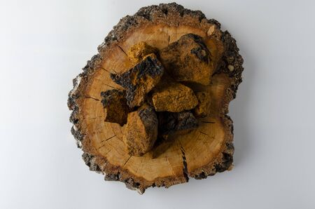 Chaga mushroom Inonotus obliquus on white