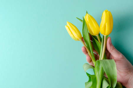 Background with yellow tulips on turquoise background. Place for text. 免版税图像