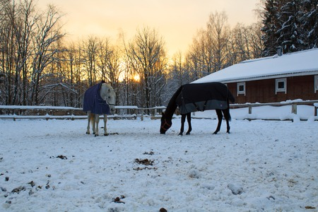 Horses on the background of a colorful sunset