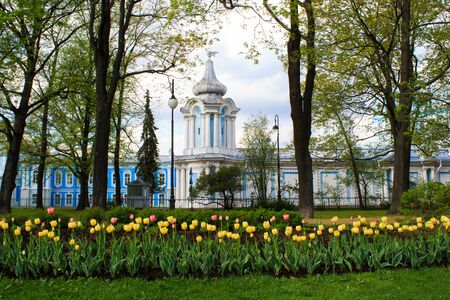 Bright tulips on the background of the Smolny Cathedral Banque d'images