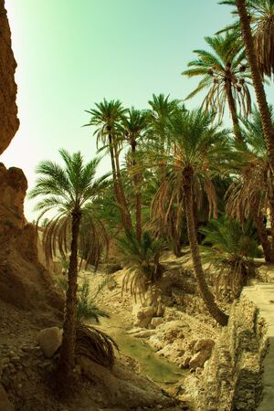 Shebika Oasis is one of the most beautiful oases in the world. It is surrounded by barren fields, mountains and desert, and it surprises with bright greenery and a cool spring. The oasis is located at the foot of the Atlas Mountains in Tunisia, near the border with Algeria.