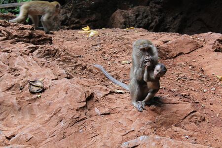 Adult monkey hugs his cub. Animals in the tropics. Hiking trips.