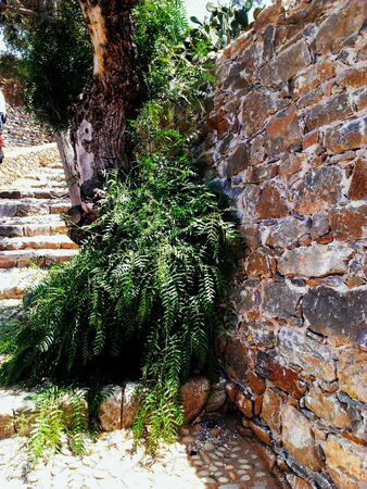 Plants on the ruins of old stone walls