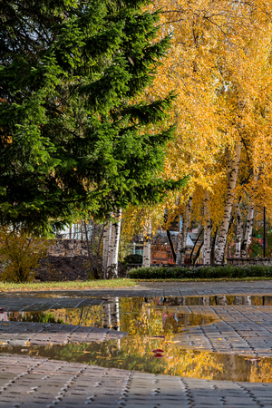 belokurikha: After a rain in autumn park of the resort Altai of West