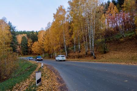 belokurikha: The autumn wood along a city road of the resort of Belokurikha