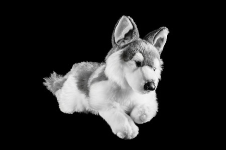 esquimales: Toy of a northern Inuit dog on a black background