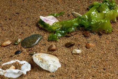 Sea cabbage on the sandy seashore