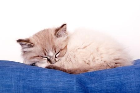 small kitten sleeping on a blue cloth