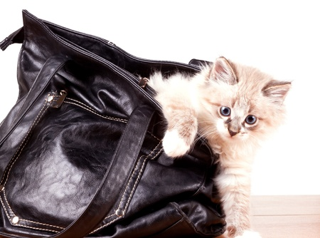 little kitty gets out of Leather Handbags Banque d'images