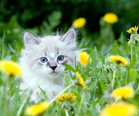 small kitten sitting in flowers