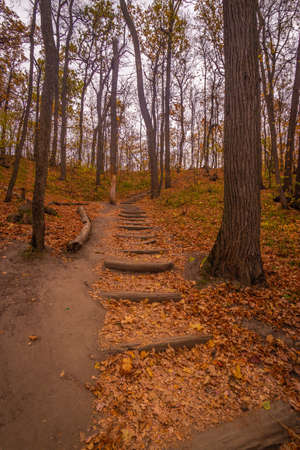 staircase made of oak logs in a beautiful autumn forest. High quality photo Reklamní fotografie