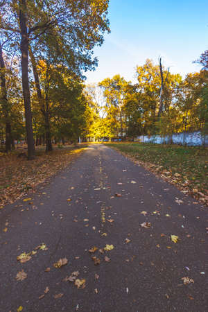a path in the autumn forest.dry foliage all around. High quality photo