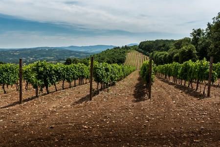 ぶどう畑と丘のセルビアの農村景観