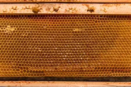 Bee Honeycomb Frame with unfinished Honey and parts of wax Banque d'images - 110247928