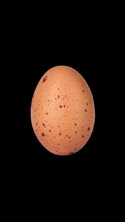 Chicken Egg Isolated on Black Background