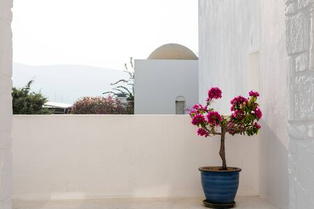 Photo of beautiful bougainvillea flower with awesome colors in flower pot in Mediterranean Turkey Banco de Imagens
