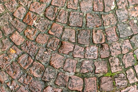 Wet or moist Brick pavement tile texture background. top view