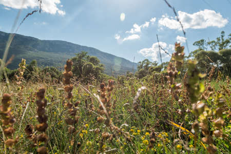 Low angle view with grass and wildflowers with hills and blue sky in background