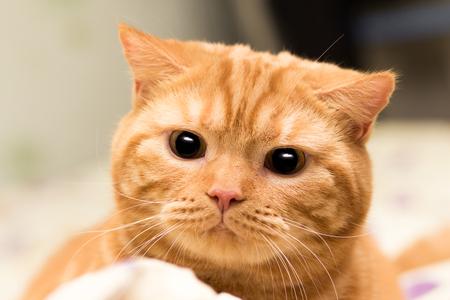 hunter playful: Cat hunter Stock Photo