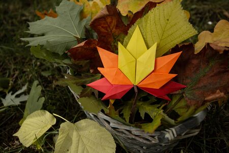 Autumn concept background traditional paper craft handmade origami fallen maple leaves nature Colorful backround image perfect for seasonal use colorfull close up
