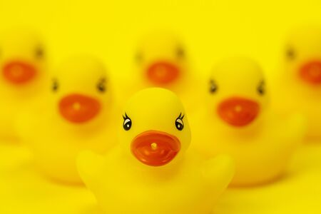 six rubber ducklings in V-shape formation close up. leadership concept