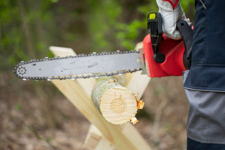 Forest worker in protective gloves saws tree trunk with the chainsaw. Cutting down trees and harvesting firewood for wintering concept. Sawdust fly to sides. Hard work with a saw. Close-up.