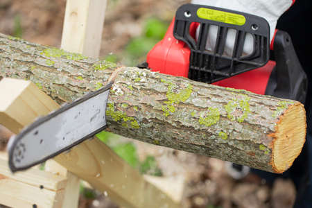 Lumberman in gloves works with chainsaw and sawing a tree in the forest. Sawdust fly to sides. Sawing chain in motion. Hard wood working in forest. Close-up.