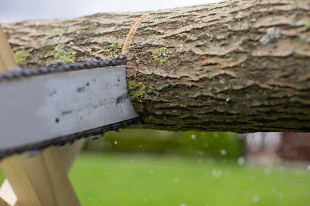 Close-up of cutting an aspen trunk with a chainsaw. Shavings and sawdust fly in different directions. Sawing chain in motion. Harvesting firewood for wintering concept.