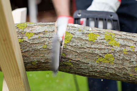 Man in protective gloves saws aspen trunk with electric chainsaw. Cutting down trees and harvesting firewood for wintering concept. Sawdust fly to sides. Hard work with a saw.