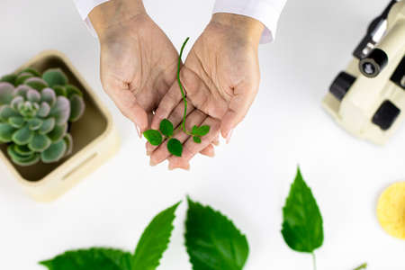 female hands hold green plant sprout on white background of cosmetology lab