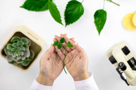 cosmetologist hands hold green plant sprout on white backdrop of cosmetology lab