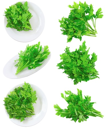 Collage (collection ) of Fresh parsley on white background. Isolated over white photo