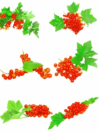 bacca: Collection (set) of red currant on branch with foliage. Isolated. Stock Photo