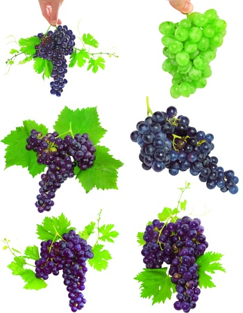 Collage(set) of various grapes with foliage. Isolated over white photo