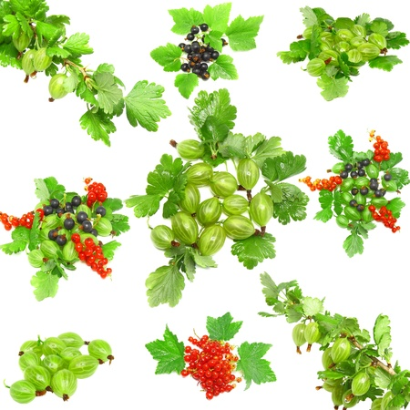 Collage(collection) of berrys - red and black currant, with leaf on white background. Isolated photo
