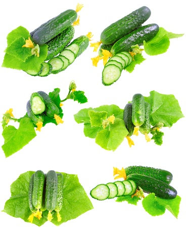 Collage (collection )of Cucumbers on white background with green leaf and yellow blossom cluster. Isolated over white. photo